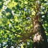Street Tree Planting at Olivia Truganina - Image of a tree